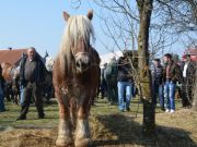 sajam-Cetingrad-2015-30
