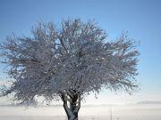 Snijeg_01_2021-16