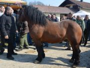 sajam-Cetingrad-2015-32